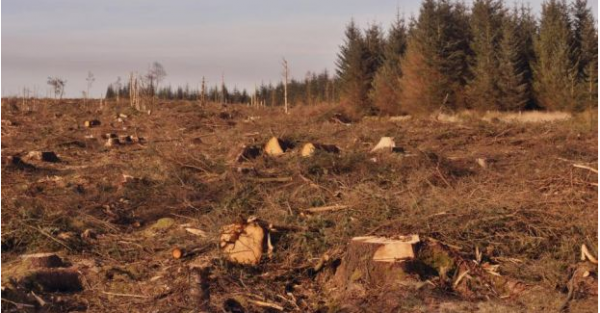Coillte uses linear programming to make decisions about when and where to cut trees to maximize long-term benefits
