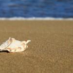 beach-2346_1280-620x350