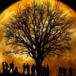 tree-66465_640-620x350